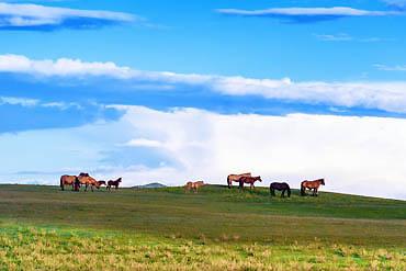 2021-摄图网_500367542_banner_内蒙草原上自由自在的马(企业商用)